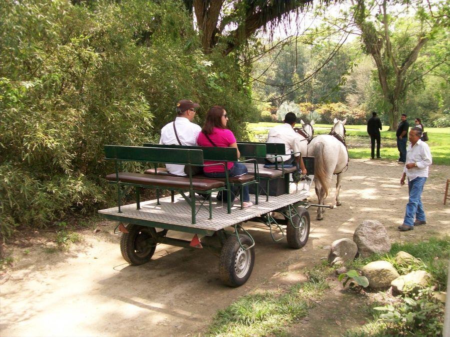 El Parque se puede recorrer en unas simpáticas carretas