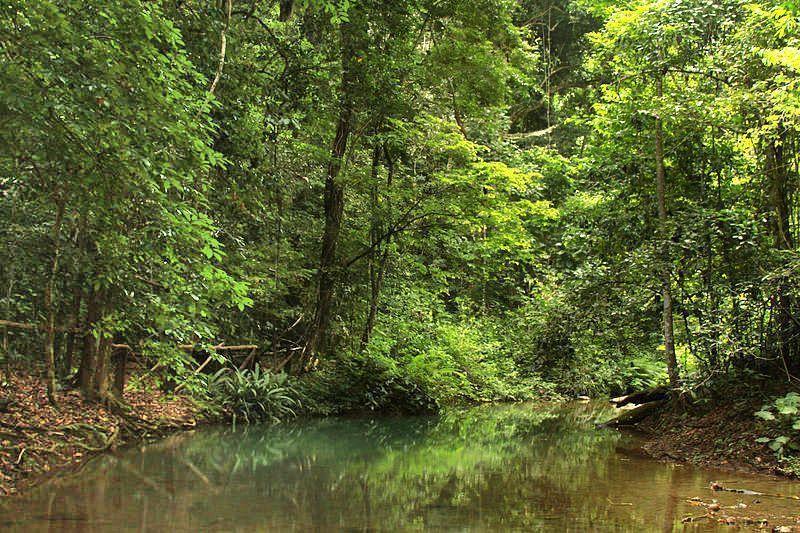 Manantial en el Parque Nacional Cueva de la Quebrada El Toro