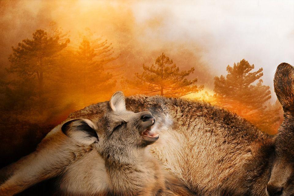 Los incendios forestales en Australia arrasaron más de 10 millones de hectáreas