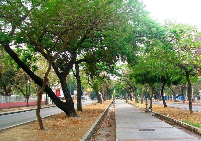 Avenida Las Delicias de Maracay